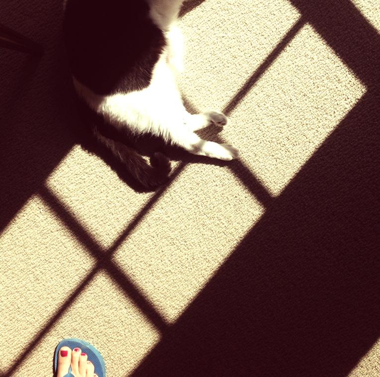cat in the sun1